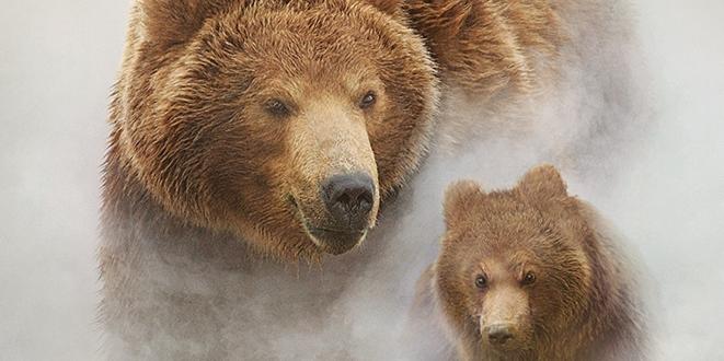 Terre des Ours - la critique